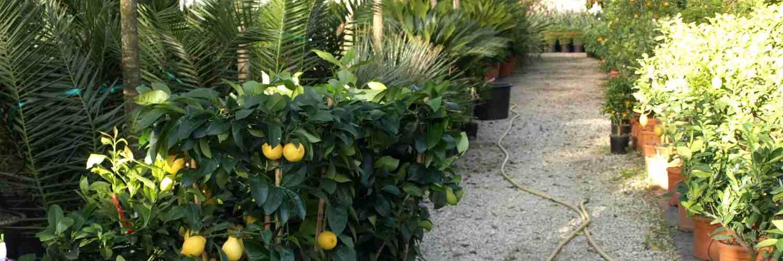 Vannucci Piante Plants : Le piante nurseries plants in pistoia